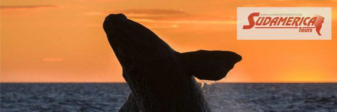 Walvissen in Argentinië